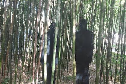 Hati-hati Menebang Pohon Bambu Jika Tidak Mau Terjadi Hal Ini
