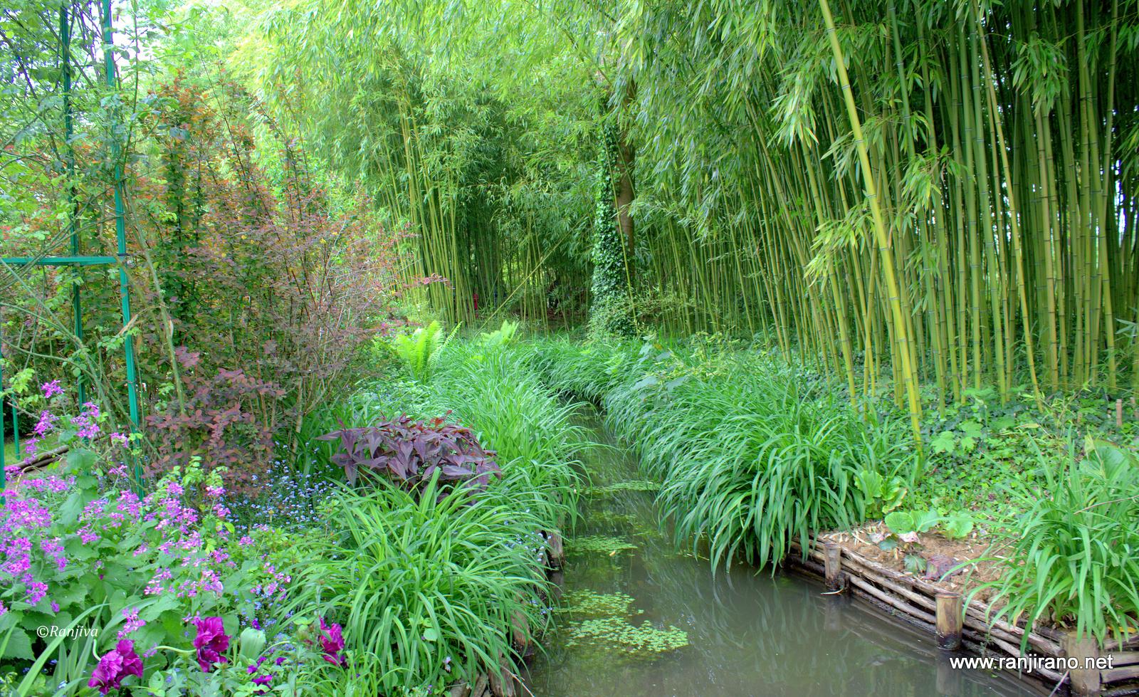 Un ravissant ruisseau dans le jardin de monet le ru giverny paysages et fleurs au fil de - Petit jardin ru ...