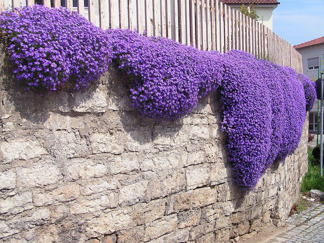 Sarkan Balkon Çiçekleri