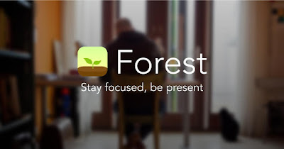 Forest Stay focused