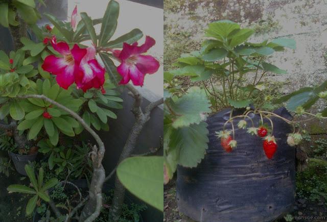 Taman di Rumah Tidak Harus Berisi Tanaman Bunga Saja