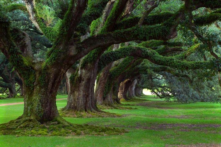 orman fotoğrafları büyük ağaç manzaralı resimler
