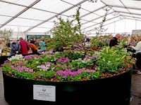 rhs show plant collection