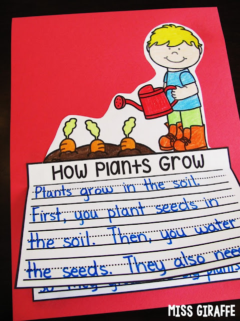 How Plants Grow writing craft that is NO PREP perfect for learning about plants in science in the springtime! It's also a great opportunity to practice how to writing. Click for a ton of fun Spring activities and writing prompts!