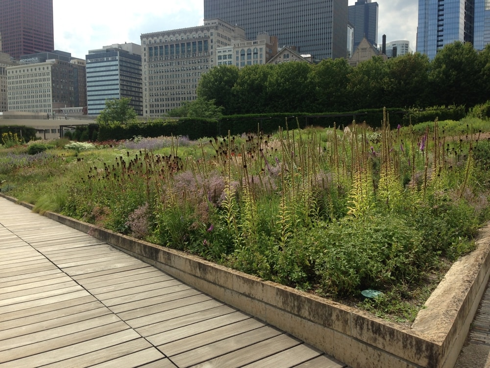 A flower bed in Lurie Garden with a matrix of perennial plants