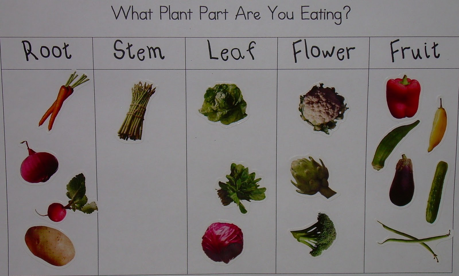 Printable Parts Of A Plant Worksheet