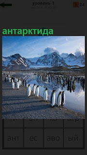 На берегу океана бродят пингвины в антарктиде на фоне снежных гор