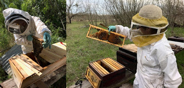 I have both top bar hives and Langstroth equipment.