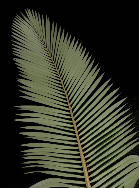 Palm Fronds Night