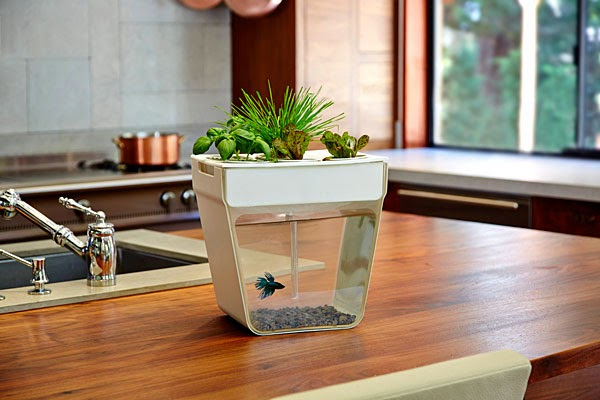 Coolest Fish Bowls and Awesome Aquarium Designs (15) 5