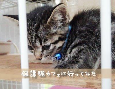 大阪の保護猫カフェ「譲渡型猫カフェ ねこの木」さんに行ってきました。