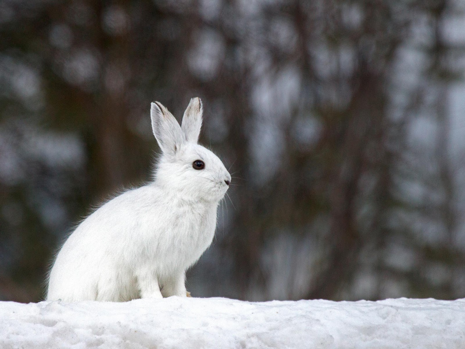 Cute White Baby Rabbits Wallpapers So Cute Rabbit 1080p Hd Wallpaper And Images Hd