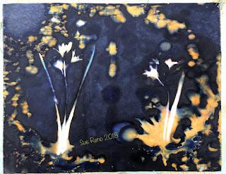 Wet Cyanotype_Sue Reno_Image 297