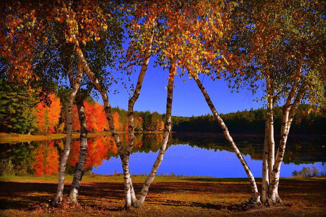 Autumn, Beauty, Club Pond, New Durham, New Hampshire, fall folliage