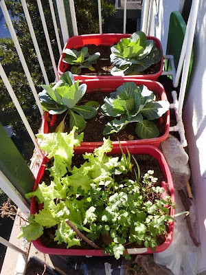 Right side balcony garden January 31