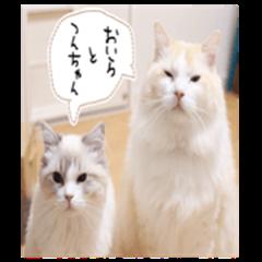 Naru and Tsun