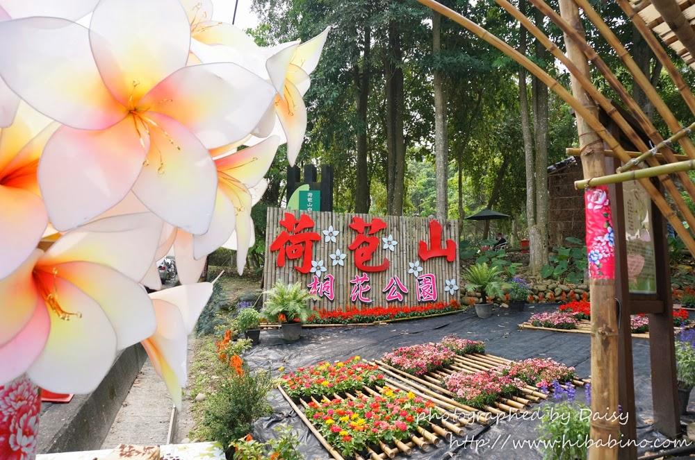 桐花季,油桐花,花季,荷苞山,雲林古坑鄉,雲林旅遊