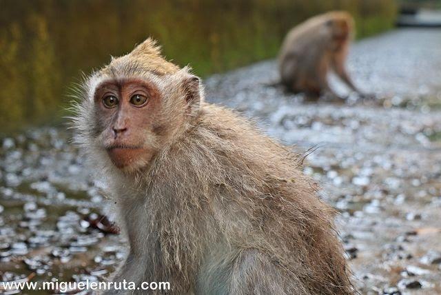 Monkeys in Ubud