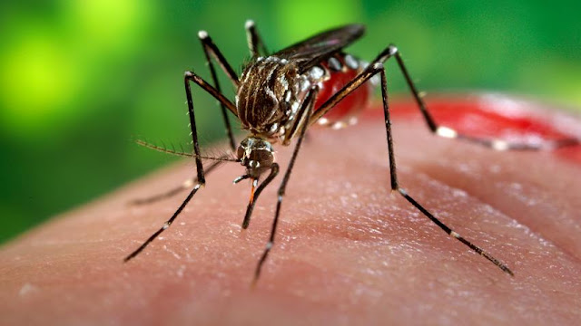 Proyek Nyamuk dan Perang Tak Kasatmata