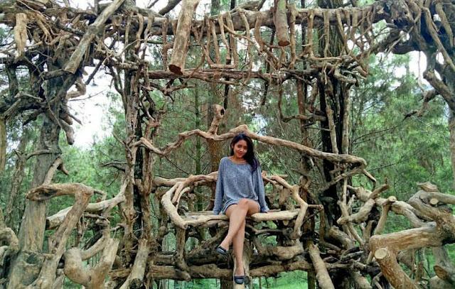 Harga Ticket Masuk Goa Pinus Batu Malang Terbaru