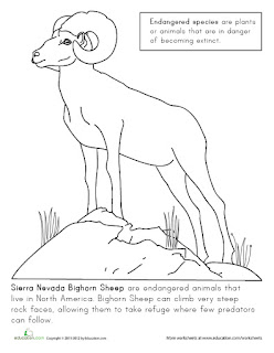 Endangered Species Coloring Pages Lori Fagerholm Illustration