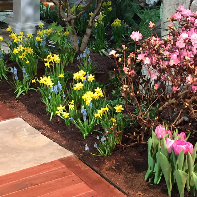 Love this bulb planting of Dwarf Daffodils and blue Grape Hyacinth | Boston Flower & Garden Show 2017
