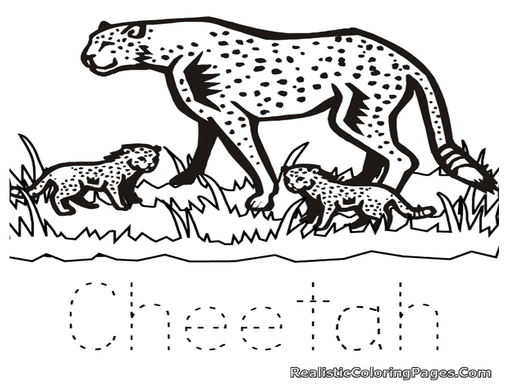 Free Coloring Pages Of Cheetah Realistic Coloring Pages