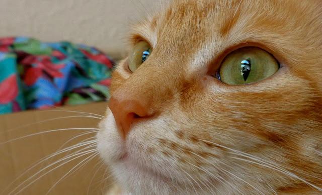 Hootie the Tabby Cat