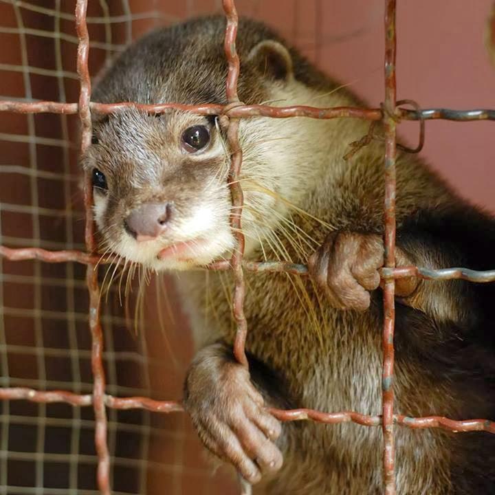 Animalisti FVG: Apriamo le gabbie e chiudiamo gli allevamenti per animali  da pelliccia! Appuntamenti LAV in Friuli Venezia Giulia
