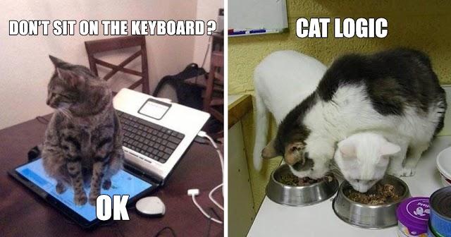 10+ Hilarious Examples Of Cat Logic