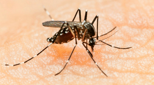 There Is Zika Virus In Nigeria - Minister Of Health