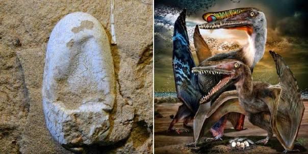 Penemuan Telur Dinosaurus di Cina Yang Masih Utuh Membuat Heboh Para Ahli Paleontologi