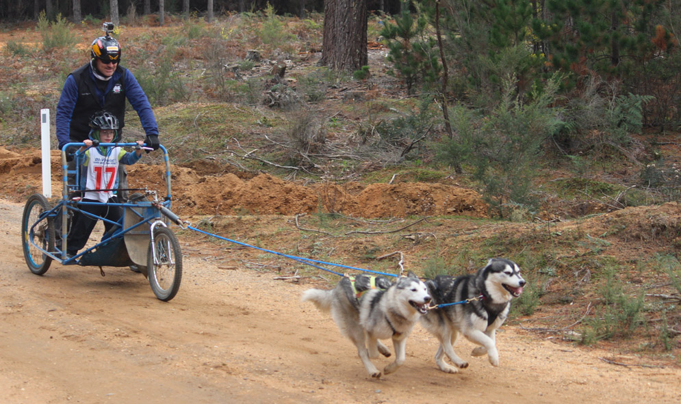 Dryland mushing