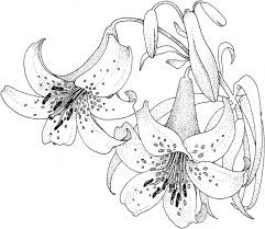 Lilies Coloring 7
