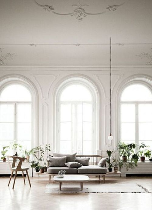 gorgeous living room with plants and huge windows