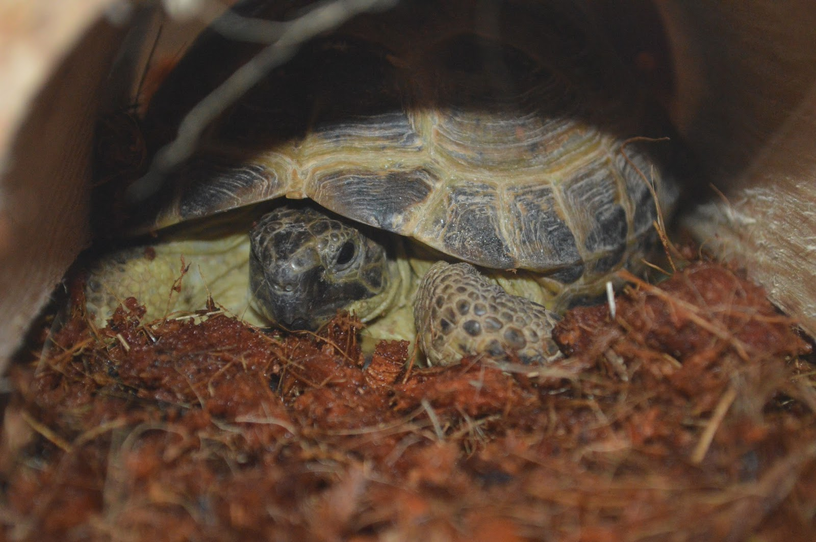Setting up a Home for a Tortoise #ad @petMD @PetSmart # ...
