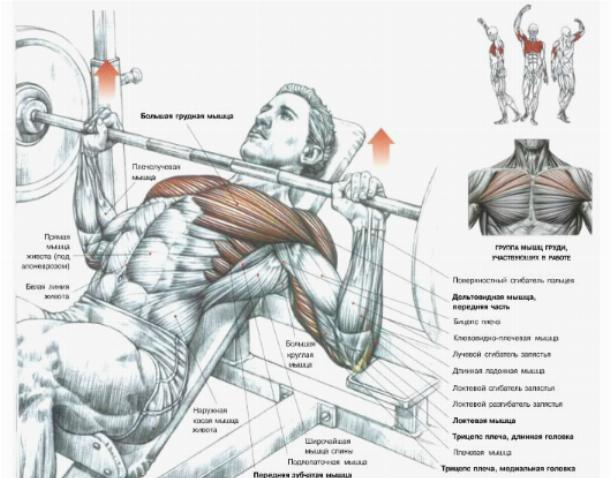 6 Technique Points To Increase Bench Press Weight ... |Flat Bench Press Muscles Worked