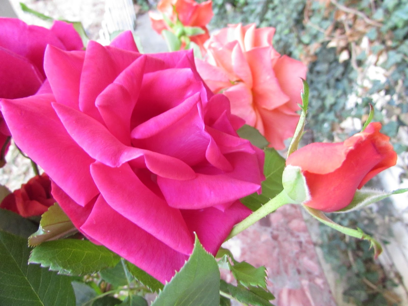 Ichabod The Glory Has Departed Some Ideas On Rose Buying