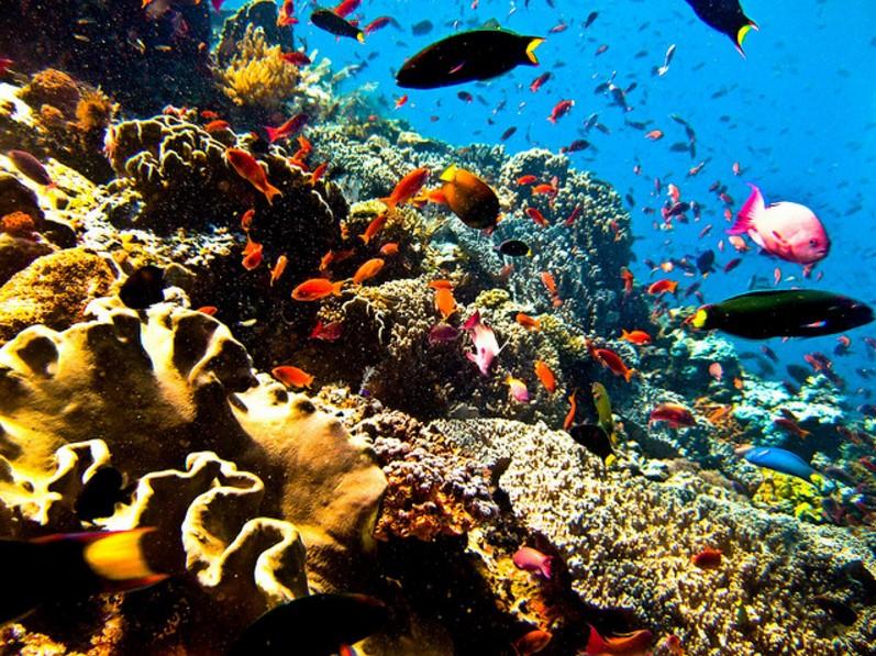 Daya Tarik Taman Laut Bunaken Manado