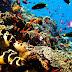 Daya Tarik Taman Laut Bunaken, Manado