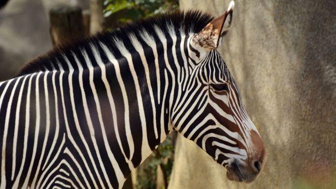 Ashinda kesi ya kuitwa Zebra