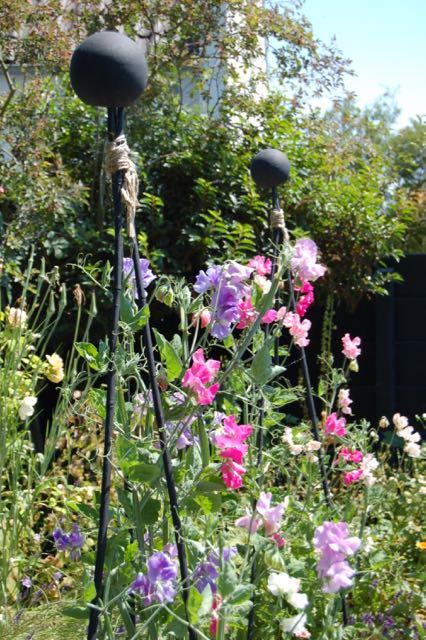 geurende lathyrus in de tuin