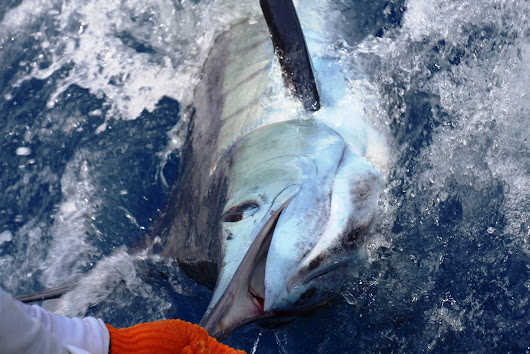 COSTA RICA TRIP REPORT - Dave West (Sportfishing Club of GB)