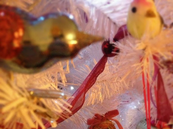 Buone Feste/ Merry Xmas