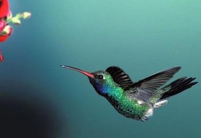 Ab Objek Gambar Flora Fauna Dan Alam Benda