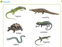 http://primerodecarlos.com/SEGUNDO_PRIMARIA/tengo_todo_4/root_globalizado4/libro/6169/ISBN_9788467808803/activity/U05_168_01_AI/visor.swf