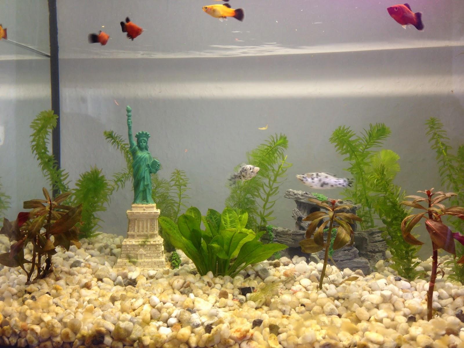 Fische im Aquarium.