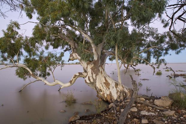 White Wolf Top 10 Aboriginal Bush Medicines A Fusion Of