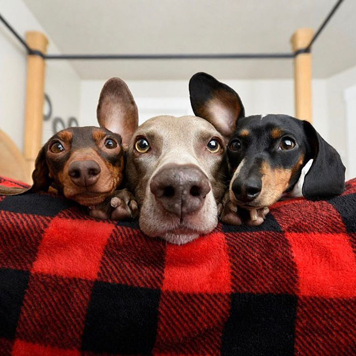 32 Animals That Look Like They're About To Drop The Hottest Albums Of The Year - This Canine Trio Posing For Their Ballad Album