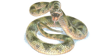 snake-vetarq-draw-book-free-poison-animais-peçonha-pdf-download-livros-vet